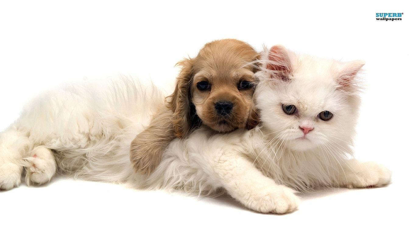 Wallpapers For > Kittens And Puppies Wallpapers