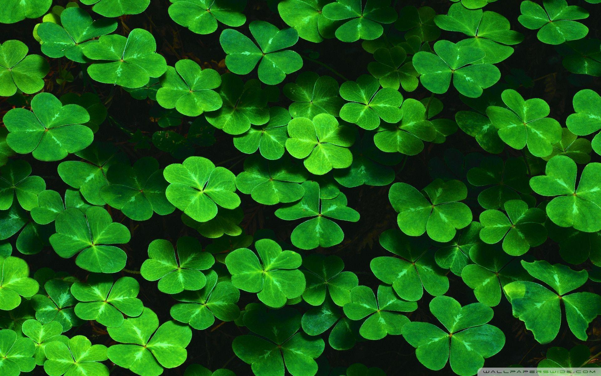 St Patrick's Day wallpaper - 85912