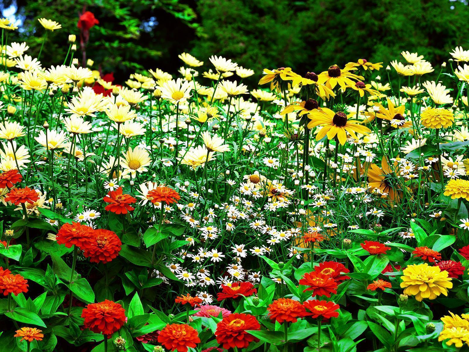 Flower garden backgrounds wallpaper cave - Garden screensavers free ...