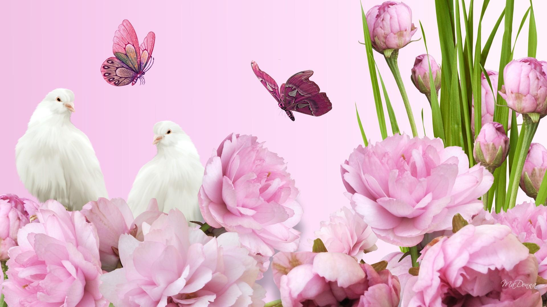 wallpapers wide 1366x768 pink - photo #28