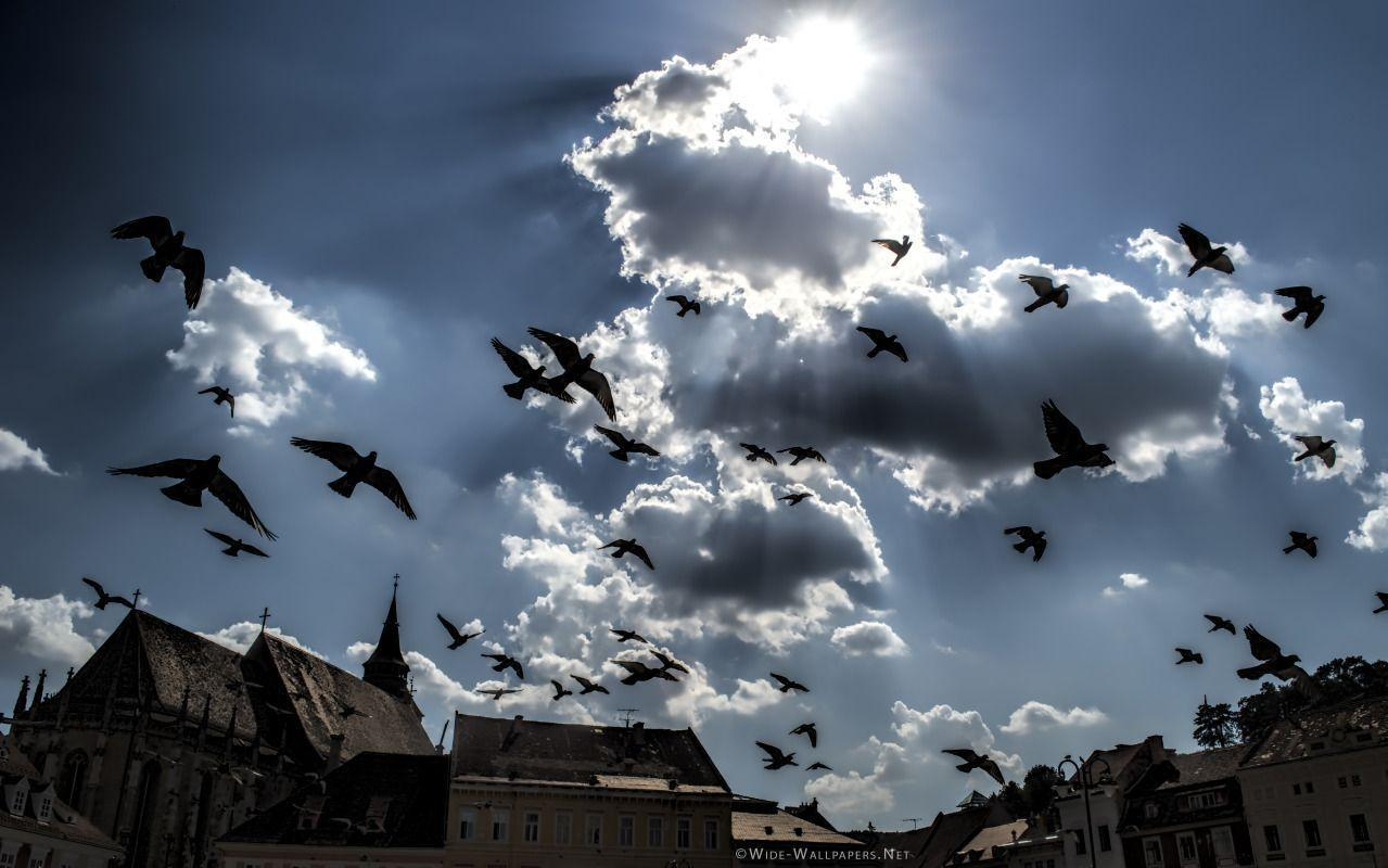 Dark Clouds and Flying Pigeons, Brasov, Transylvania, Romania