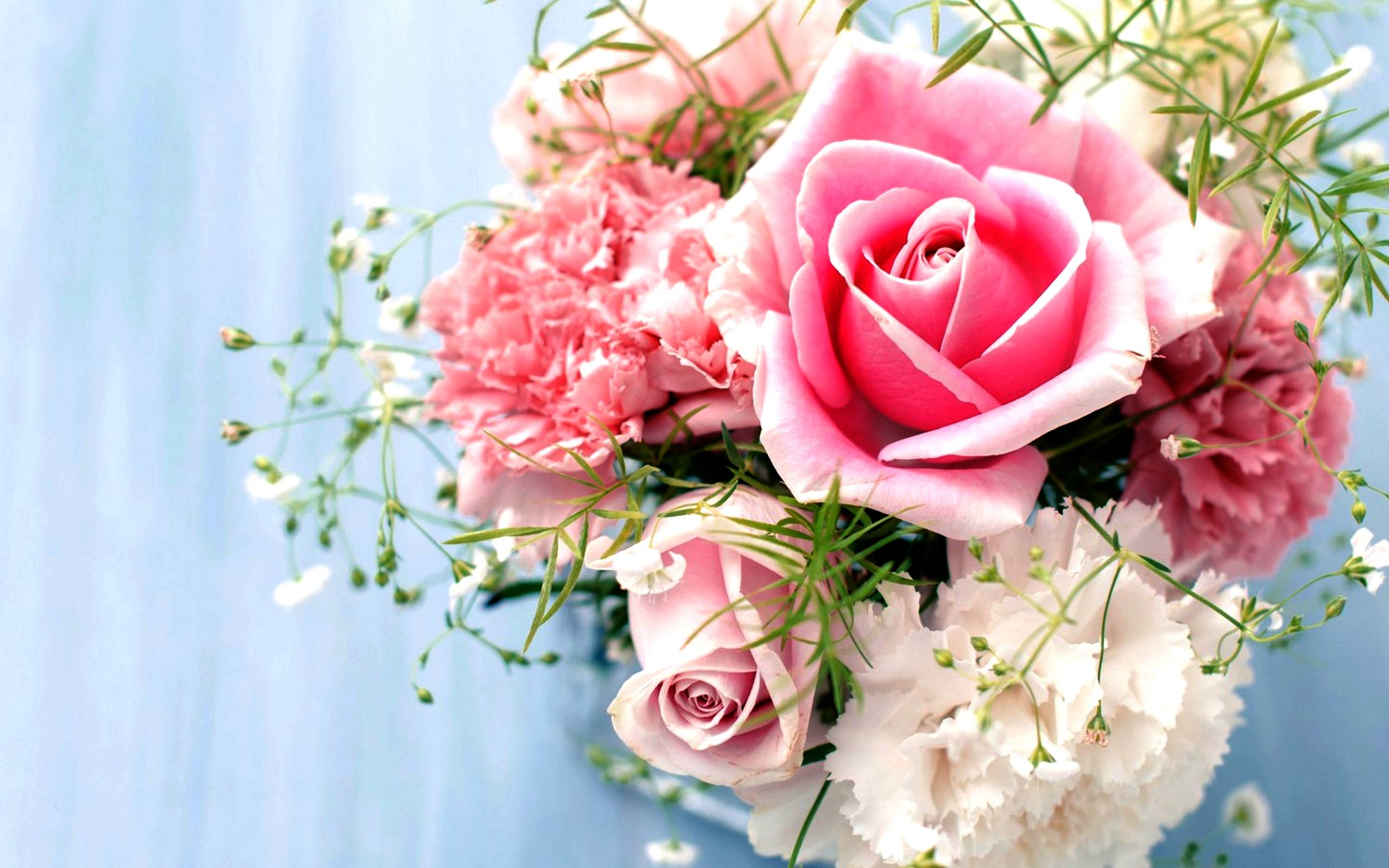 Wallpapers Pink Roses