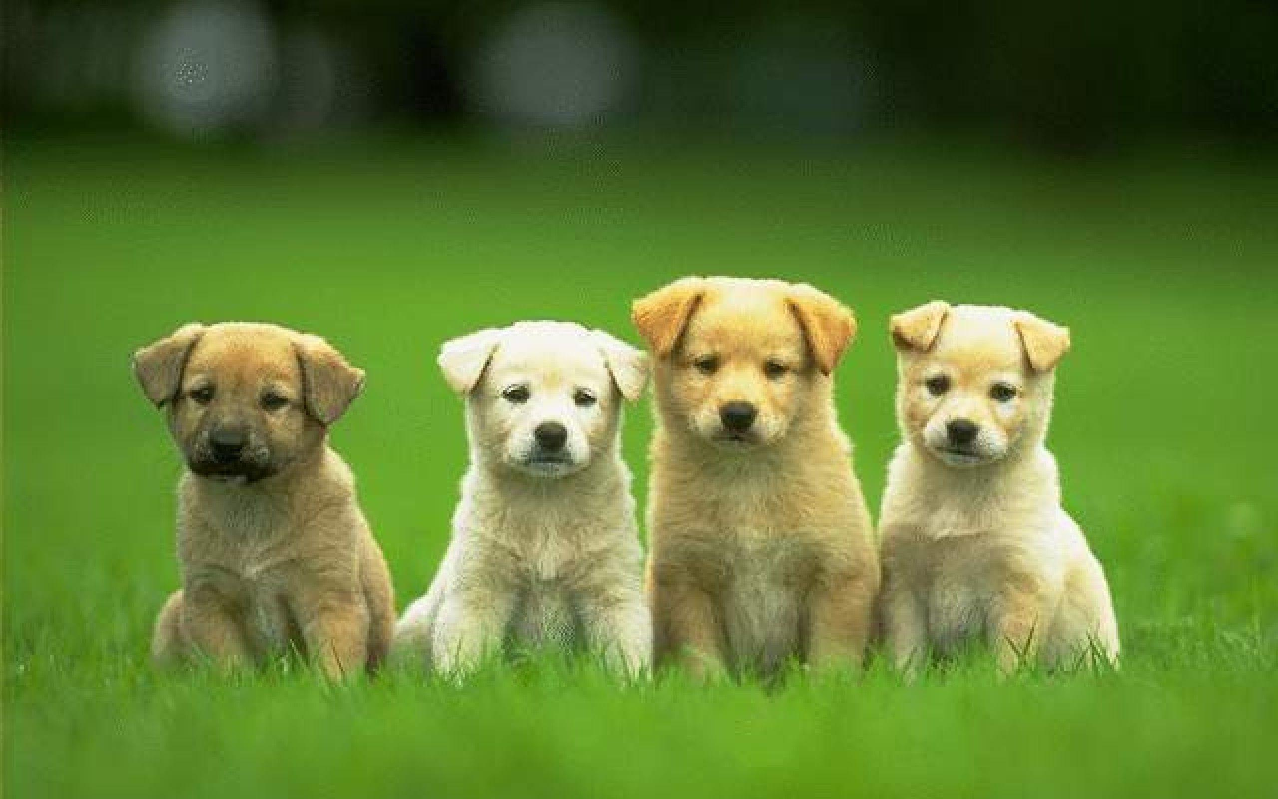 Image For > Cute Dogs Wallpapers Free Download