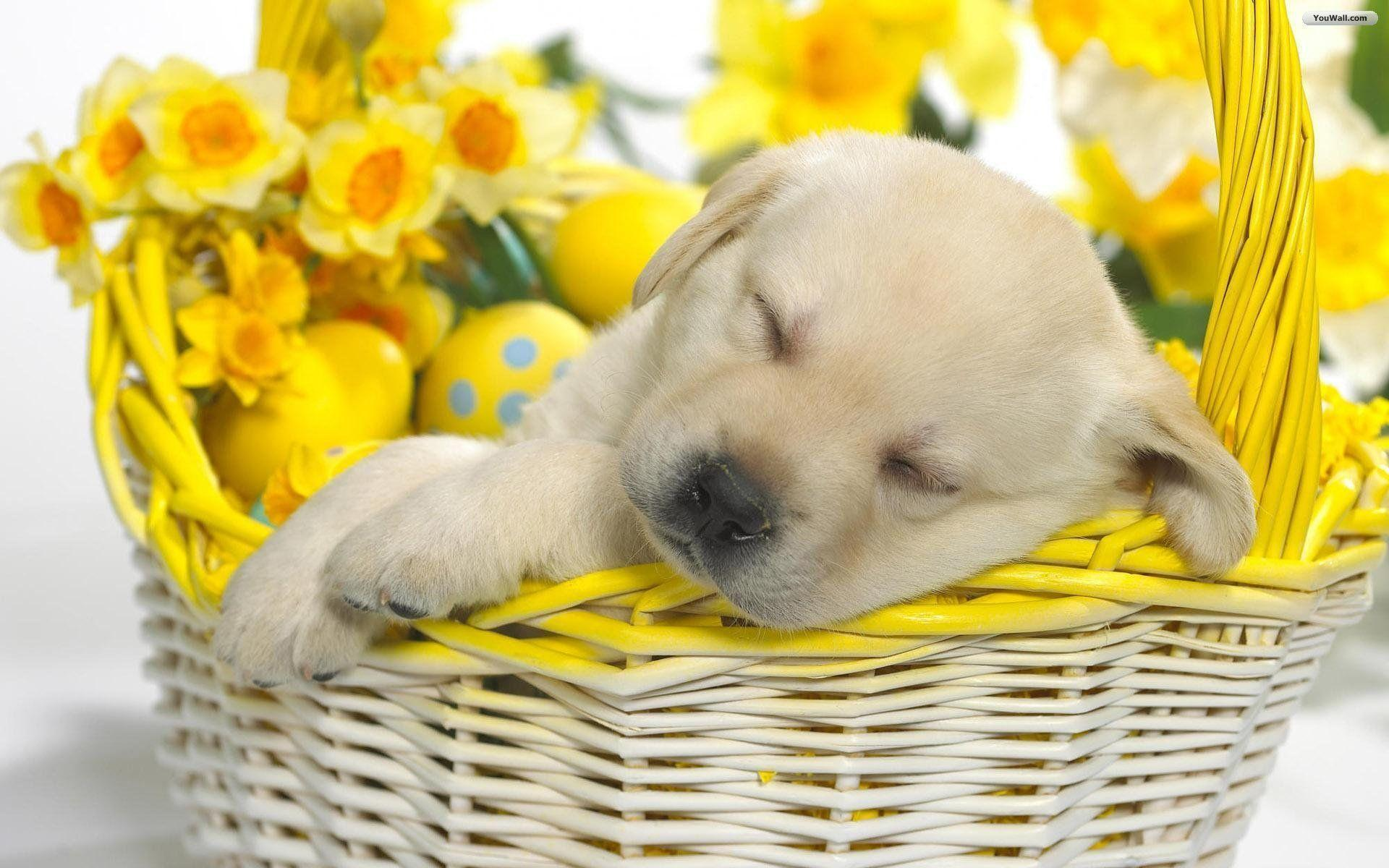 Free Puppy Wallpapers