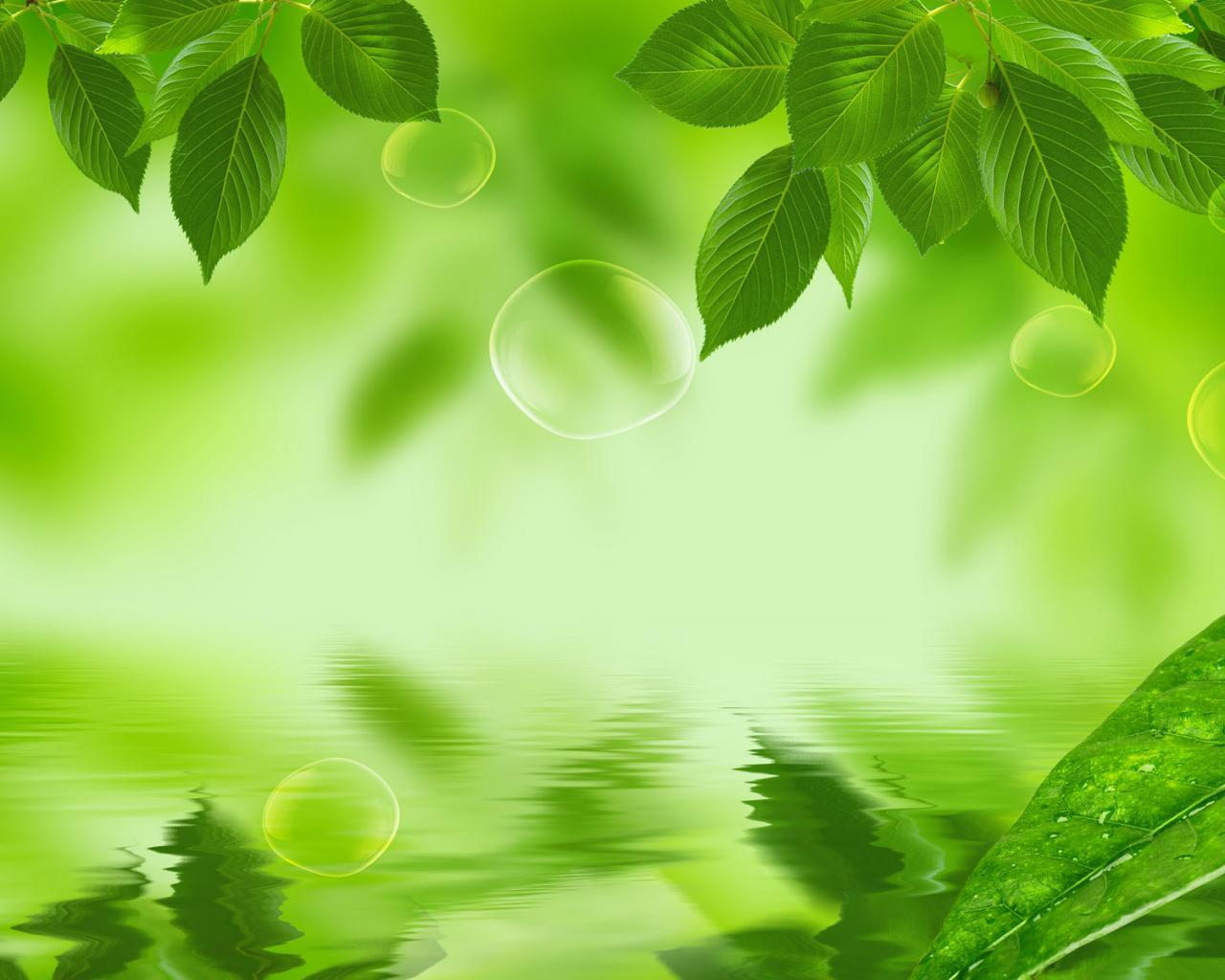 Green leaves Wallpapers Nature wallpaper Green wallpaper Plant