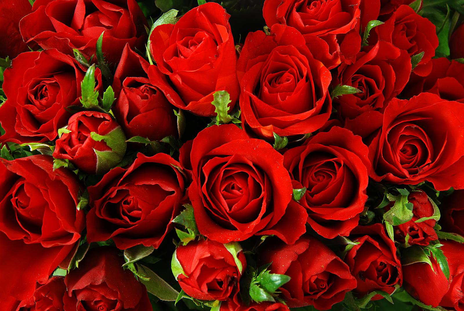 Roses Backgrounds Image - Wallpaper Cave
