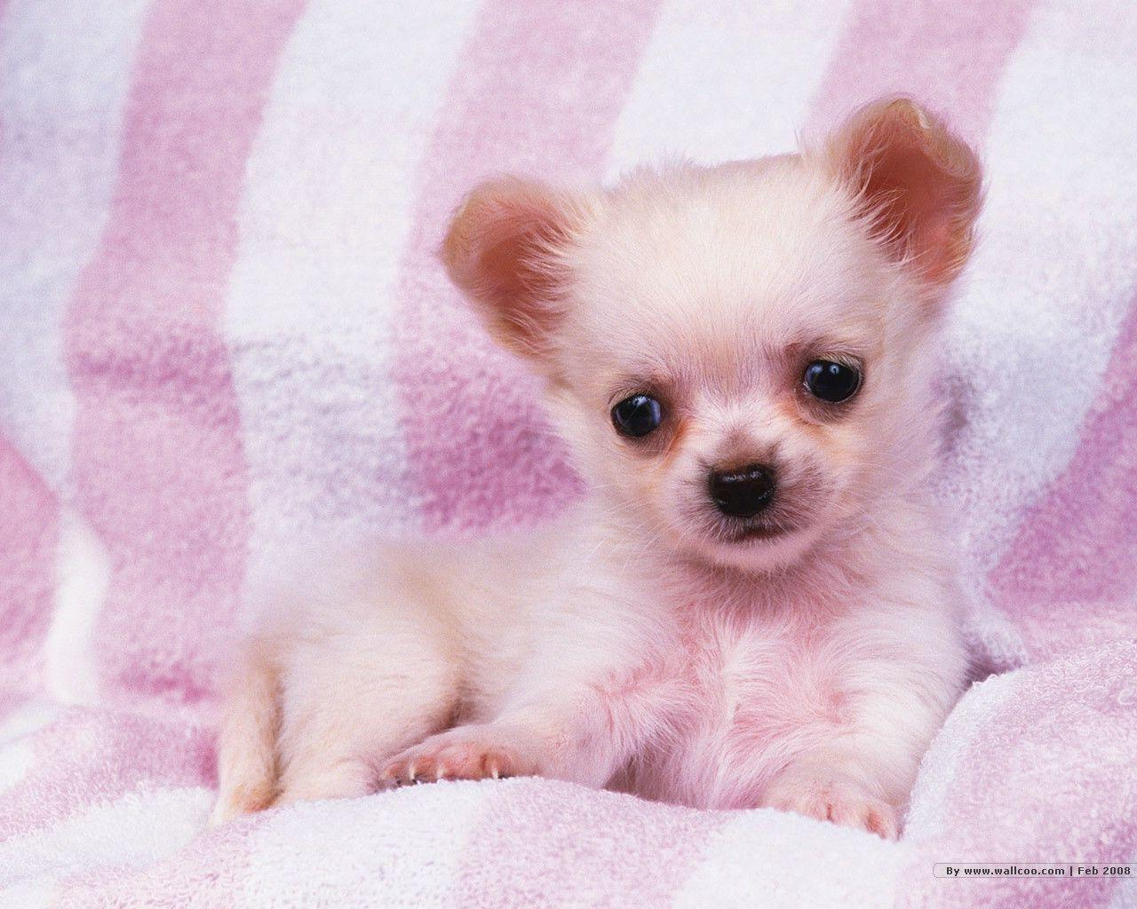 Cute Puppy Wallpapers For Desktop - Wallpaper Cave
