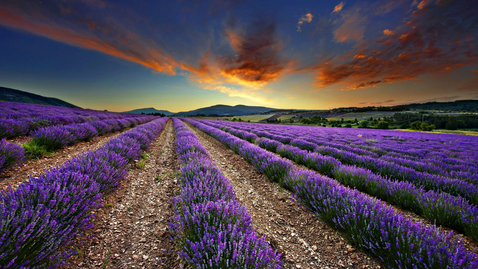 Lavender wallpapers wallpaper cave for Jardin 0 l4anglaise