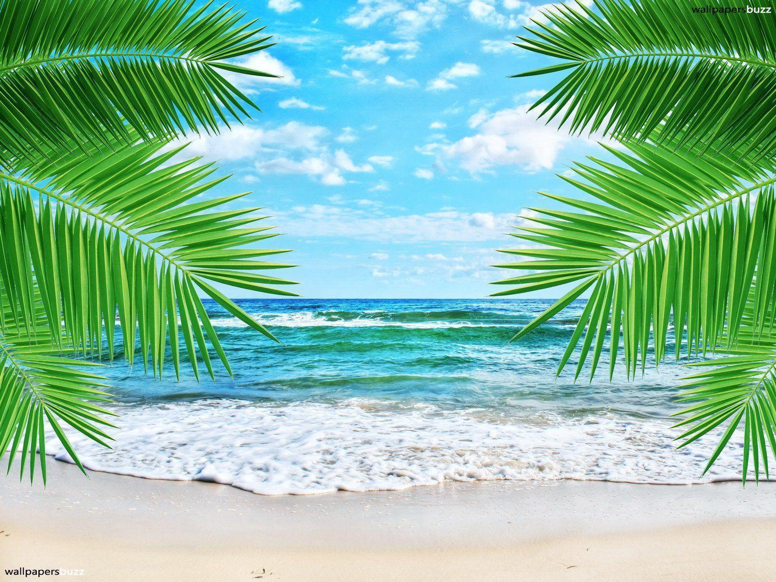 awesome tropical beach wallpapers - photo #33