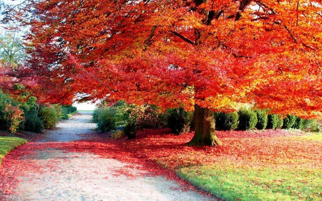 Fall Foliage Backgrounds - Wallpaper Cave