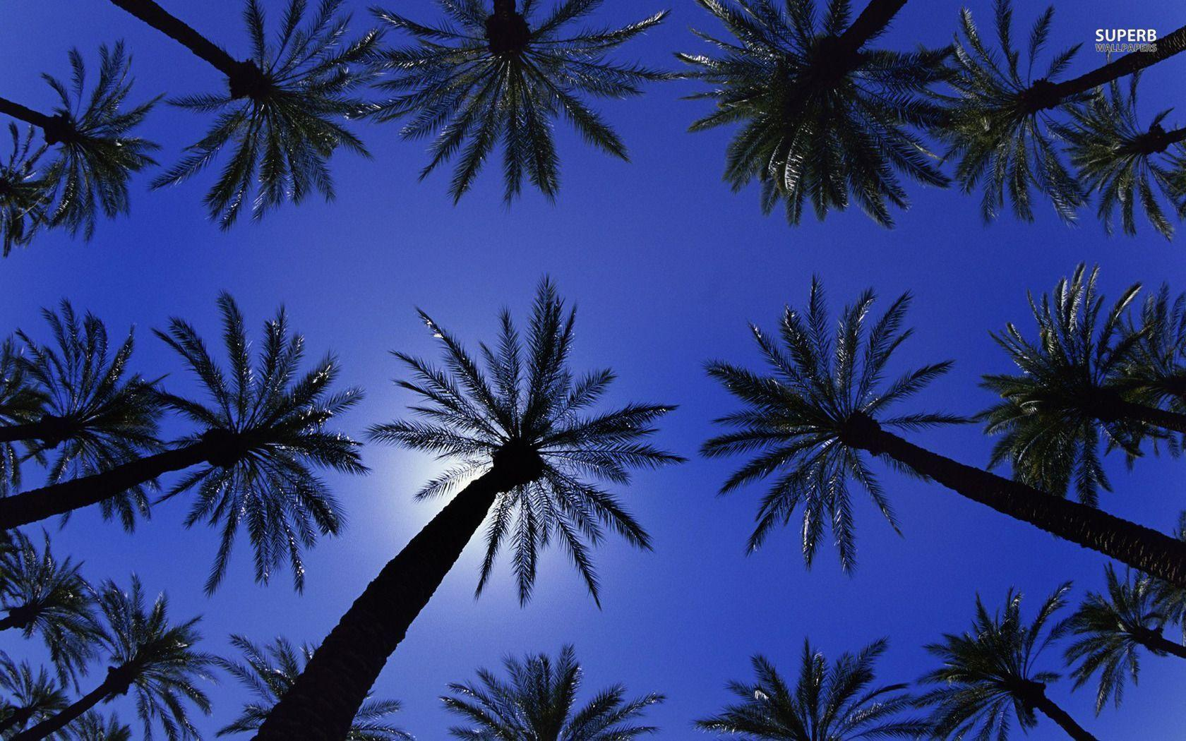 palm trees wallpapers wallpaper cave