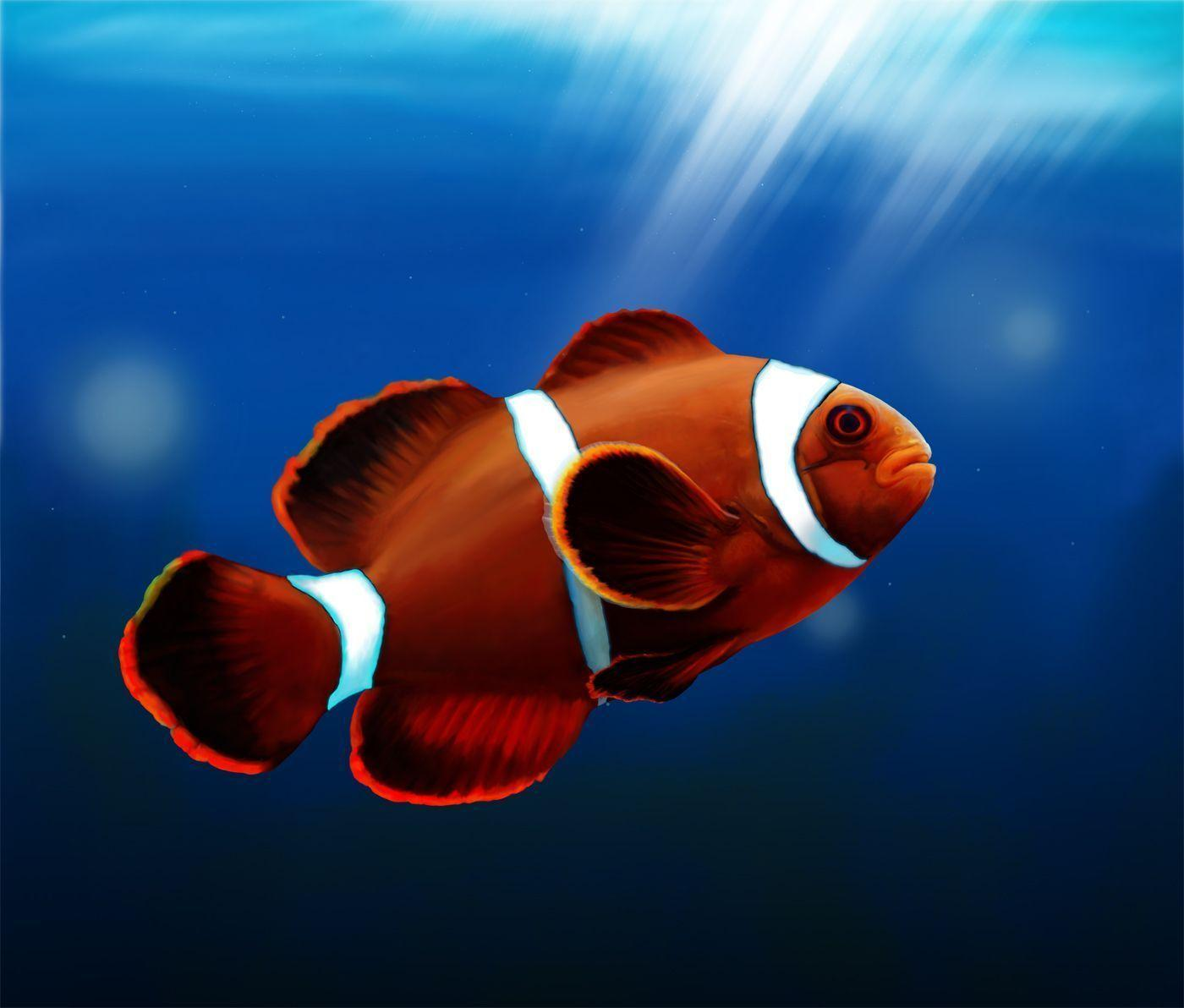 Cute Clown Fish Wallpapers For Android. Fish, Wallpapers, Cute