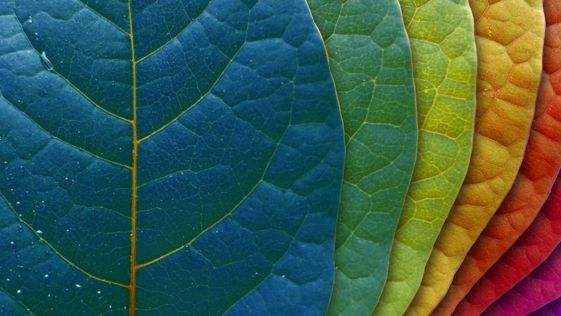 macbook retina wallpapers chainsmokers - photo #41