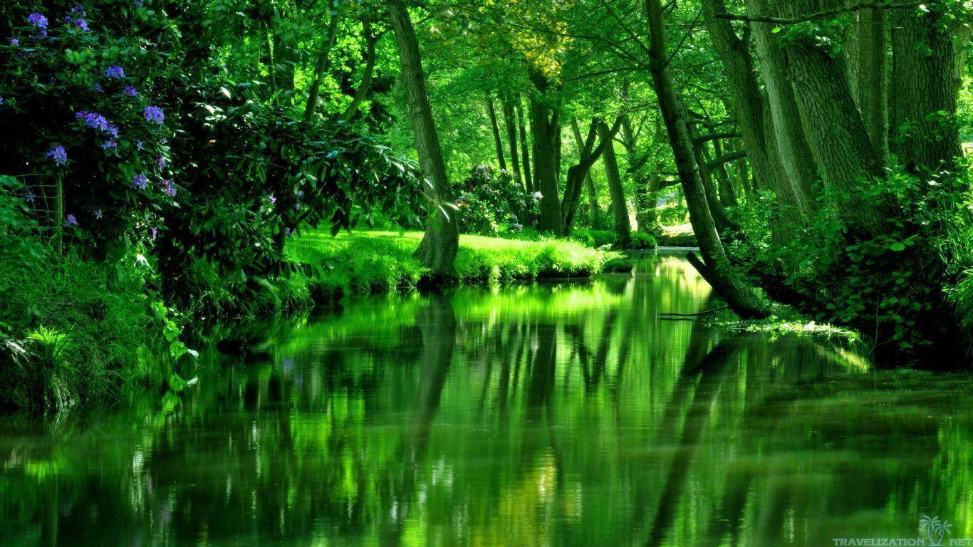 forest green wallpapers wallpaper cave