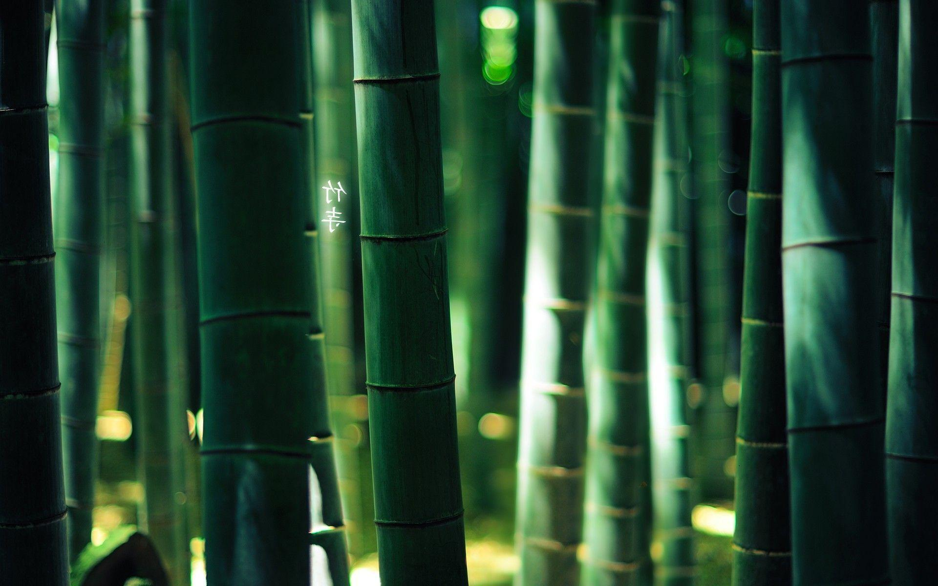bamboo wallpaper by doantrangnguyen - photo #15