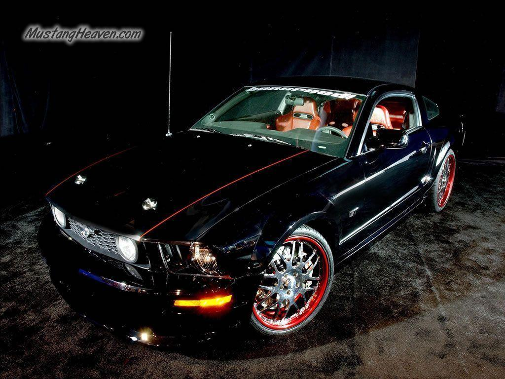 Mustang Wallpaper - mustangs Wallpaper (6411238) - Fanpop
