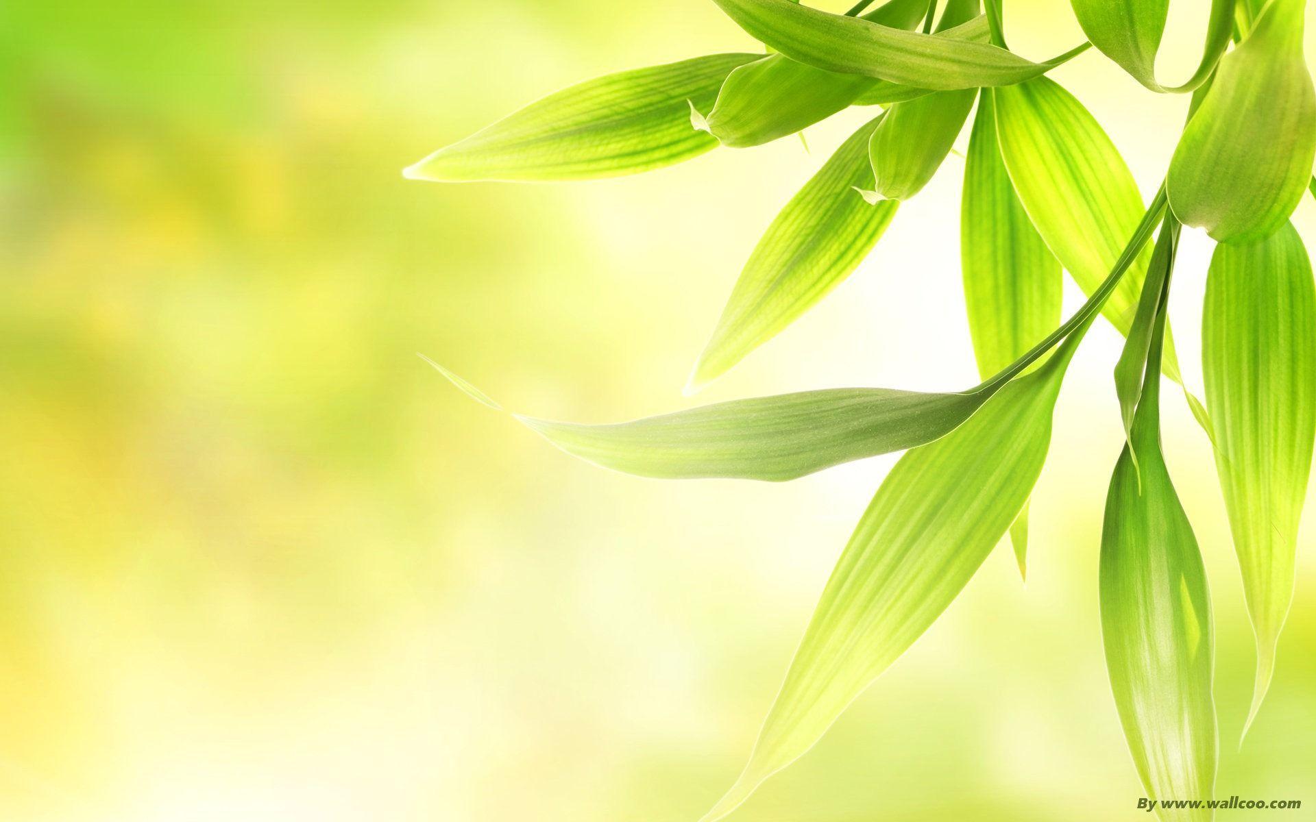 Fresh Green Dim Leaves