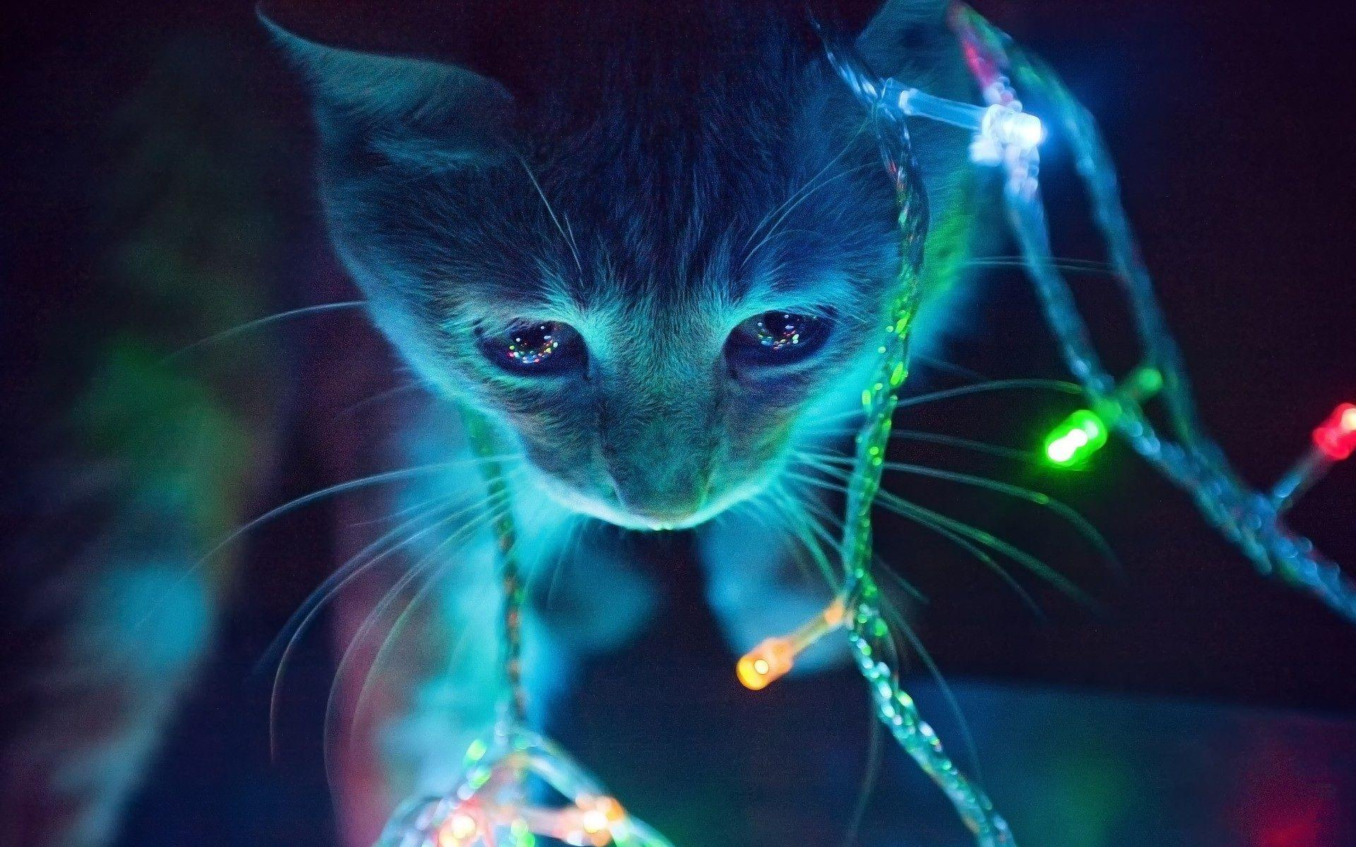 Christmas Lights Cat Wallpapers 35612 1920x1200