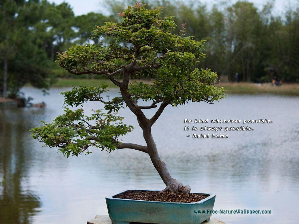 Quotes Wallpaper Pictures | Bonsai-Tree - 1024x768