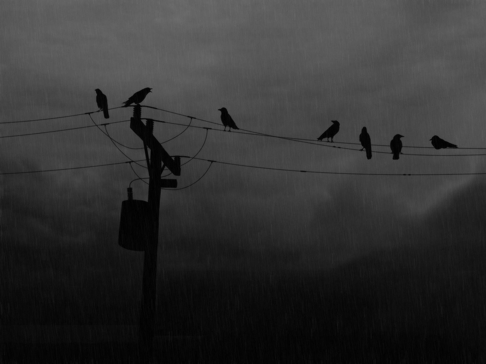 Image Rainy Day Wallpaperrainy Day Crows Wallpapers Free