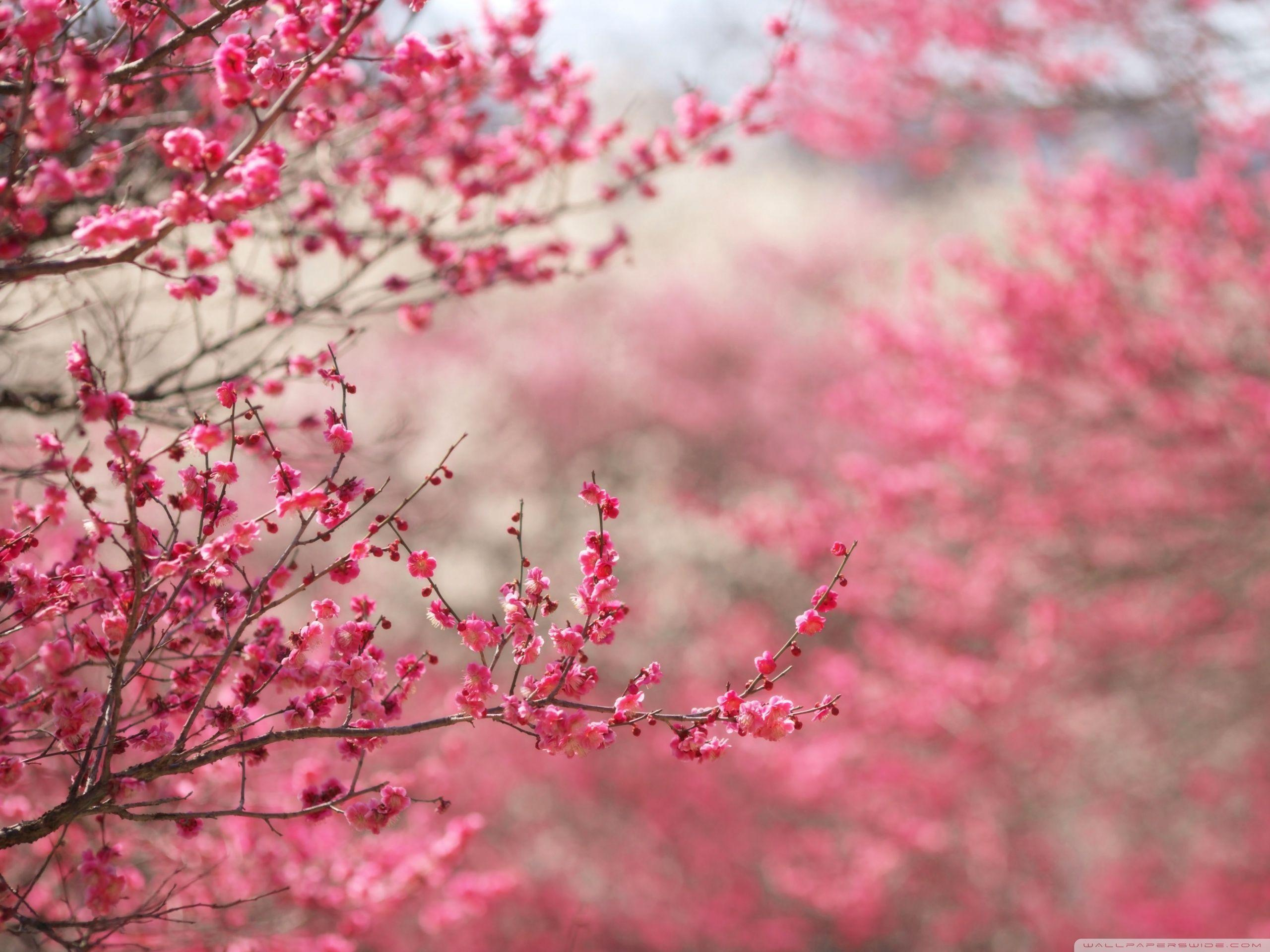 Spring Wallpapers Wallpaper Cave