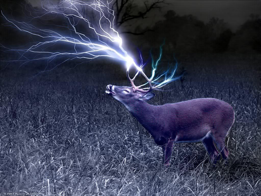 deer wallpaper for my desktop - photo #34