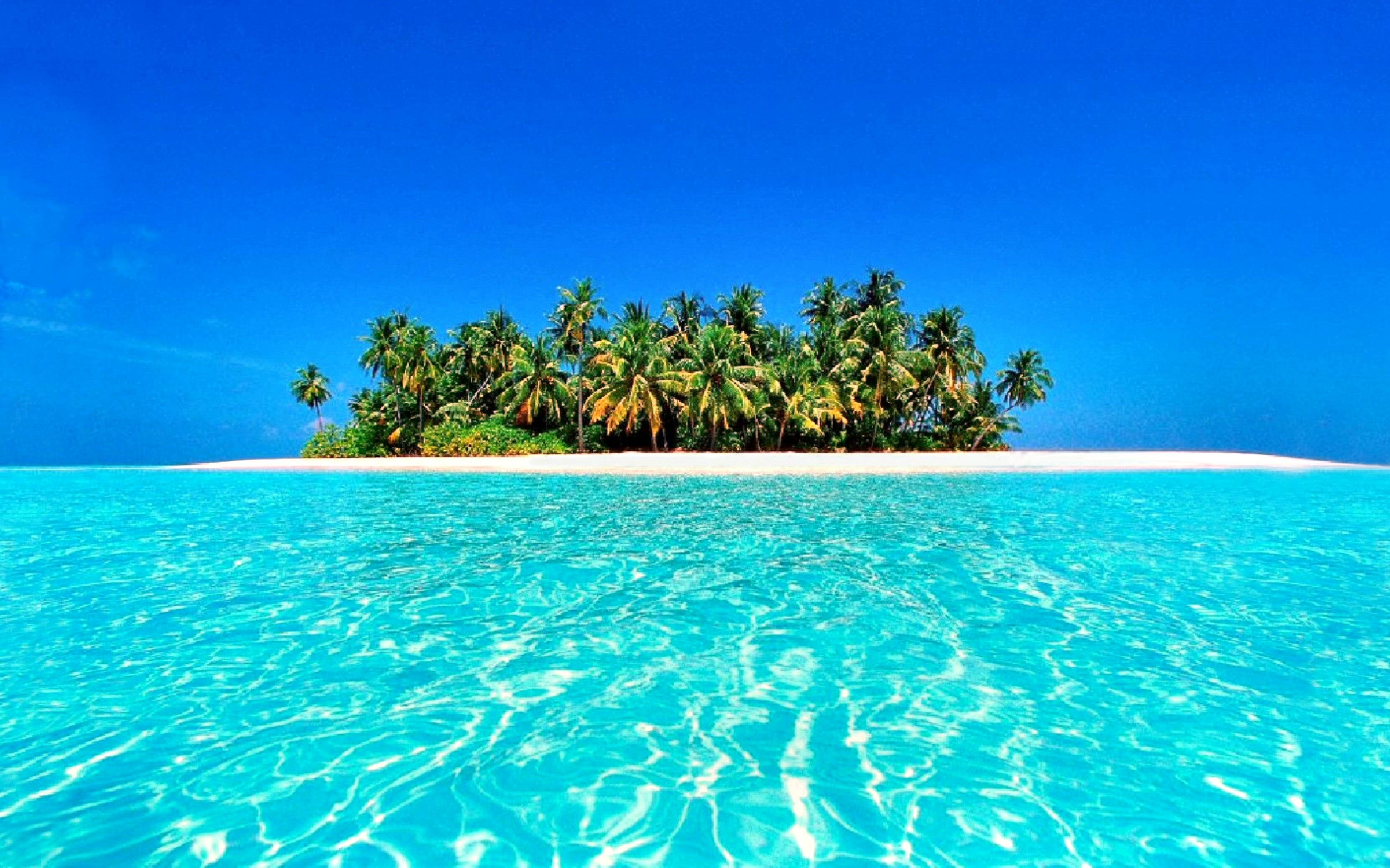 Http Wallpapercave Com Tropical Wallpaper