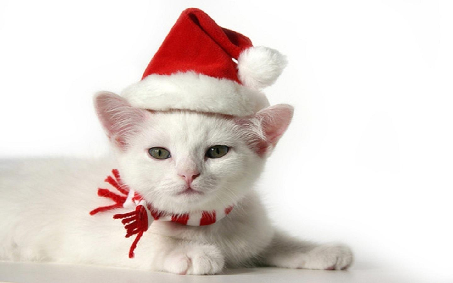 christmas kitten Christmas Kitten 1920x1200 of-
