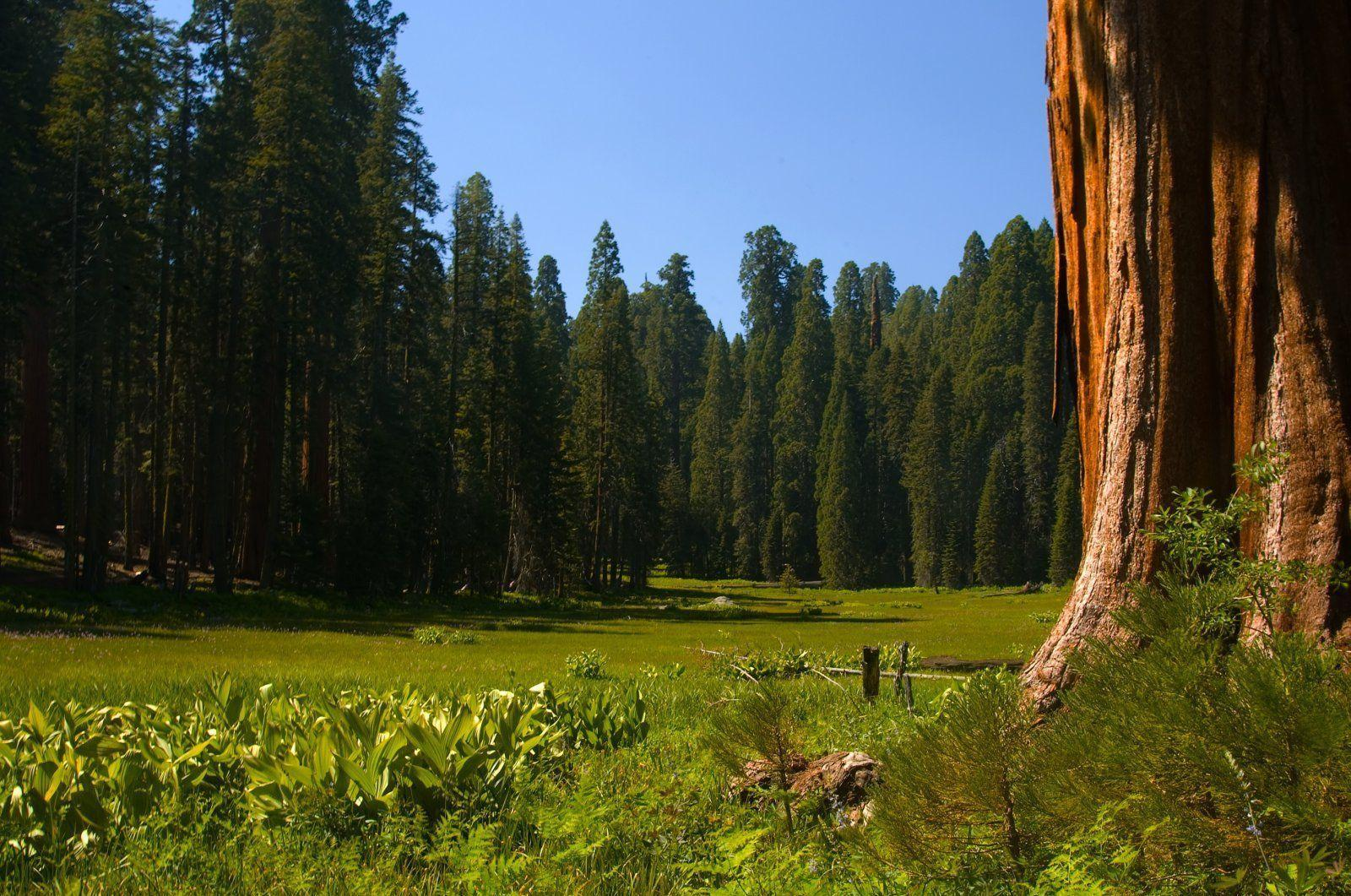 Sequoia in Romania