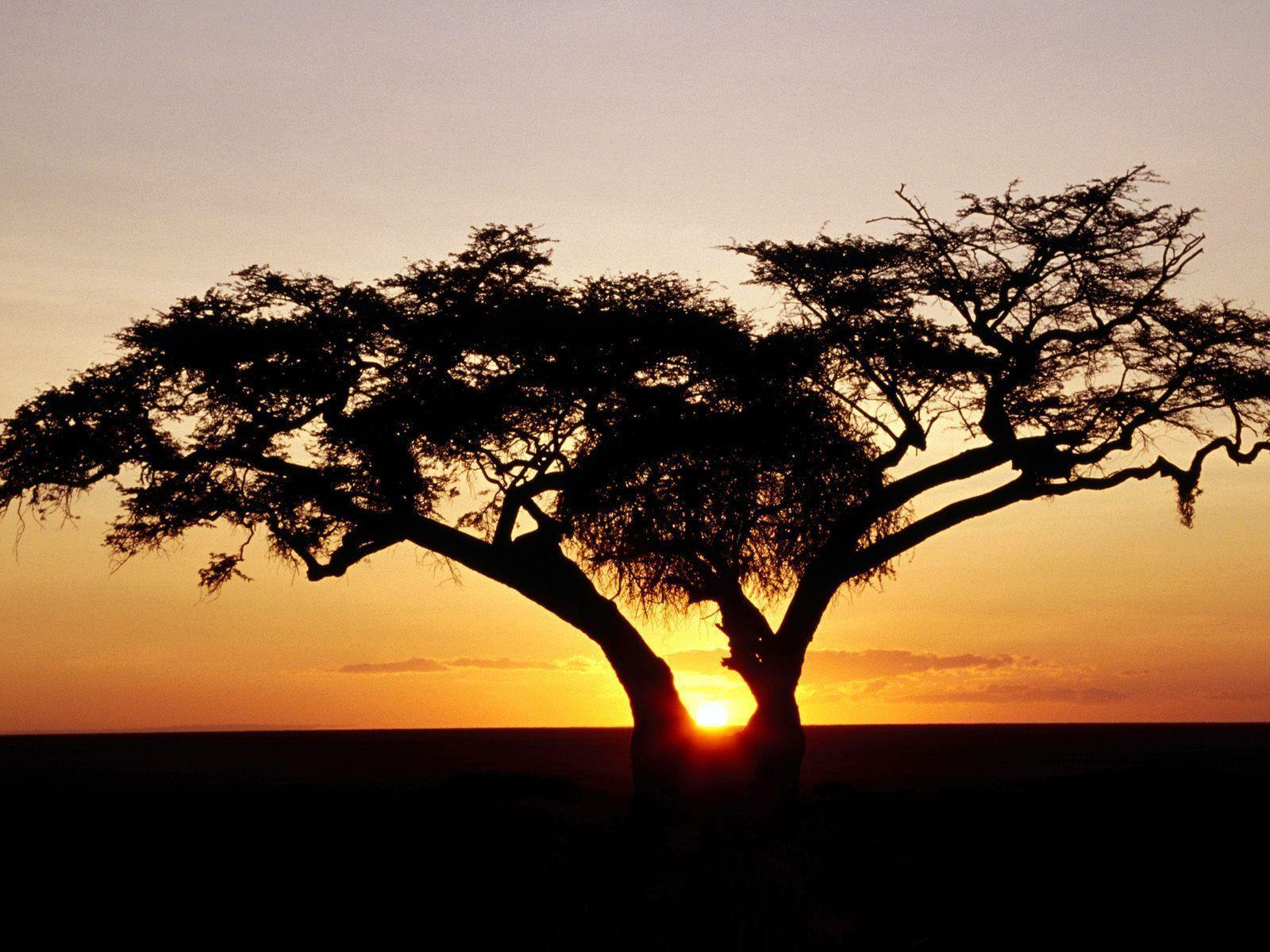 HD Wallpapers: 1600x1200 » Nature » Safari Sunrise, Africa Free