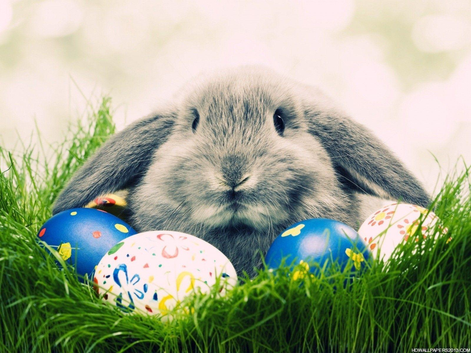 Easter Wallpapers 68 223138 Image HD Wallpapers
