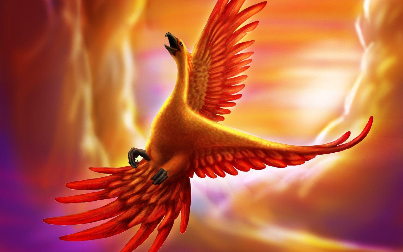 phoenix bird wallpapers wallpaper cave
