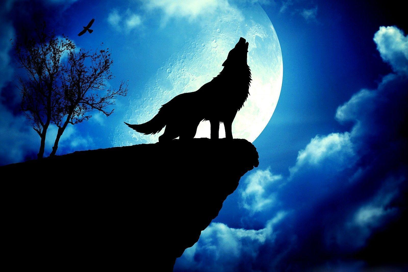 Wallpapers For > Wolf Howling At The Red Moon Wallpapers