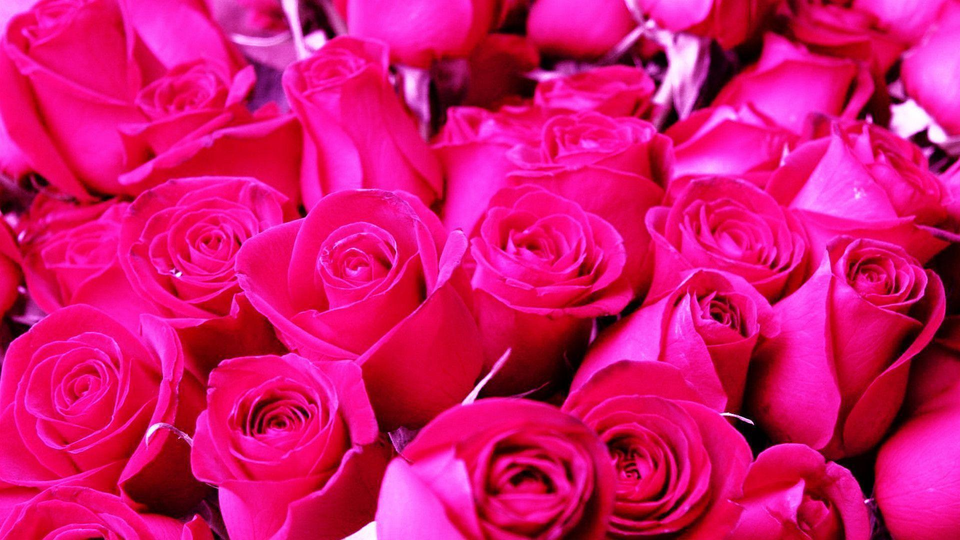 Pink roses backgrounds wallpaper cave - Pink rose hd wallpaper ...