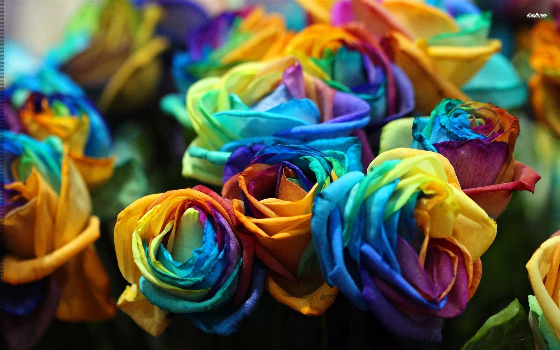Multi colored wallpapers wallpaper cave for Pictures of multi colored roses