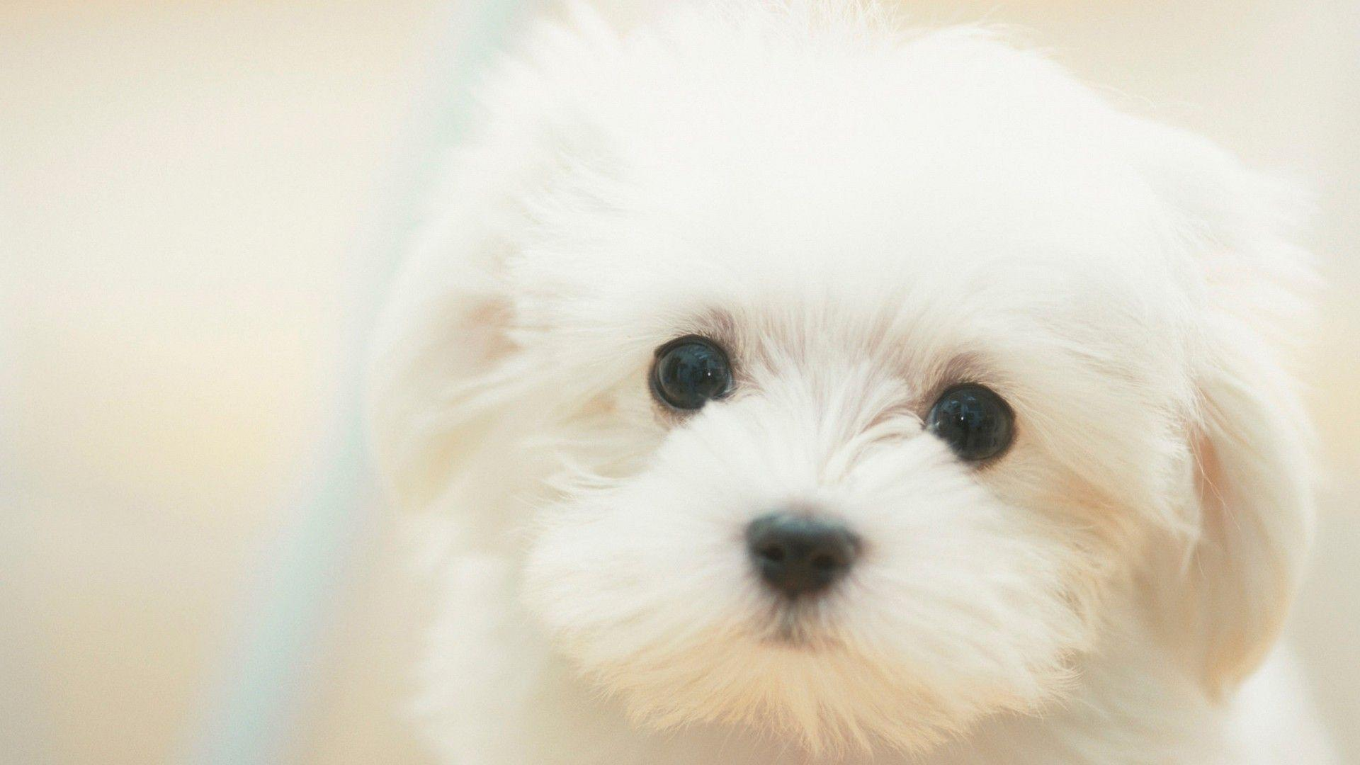 Puppy Wallpapers - Wallpaper Cave