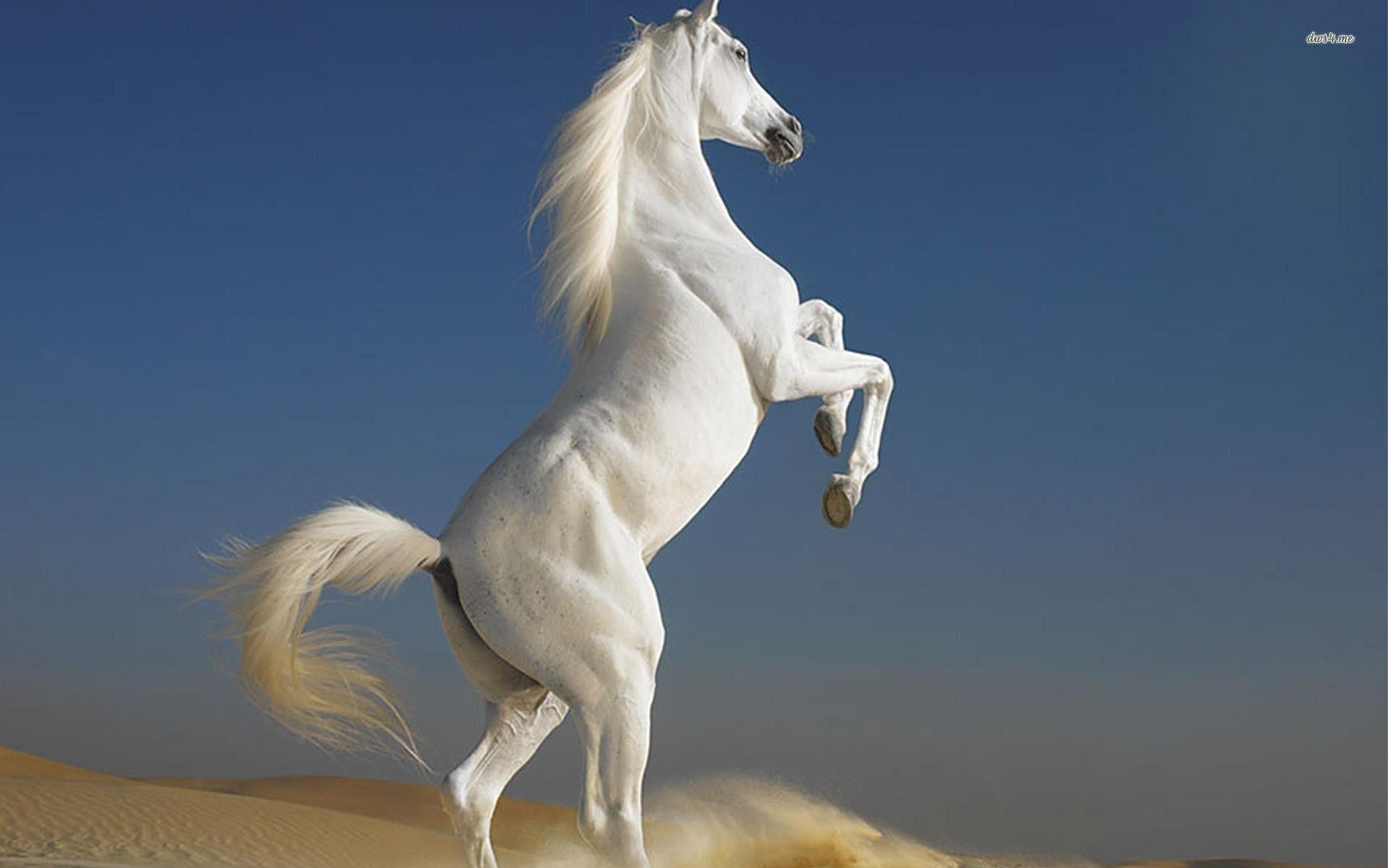 White horse wallpapers wallpaper cave white horse sky hd wallpaper altavistaventures Image collections