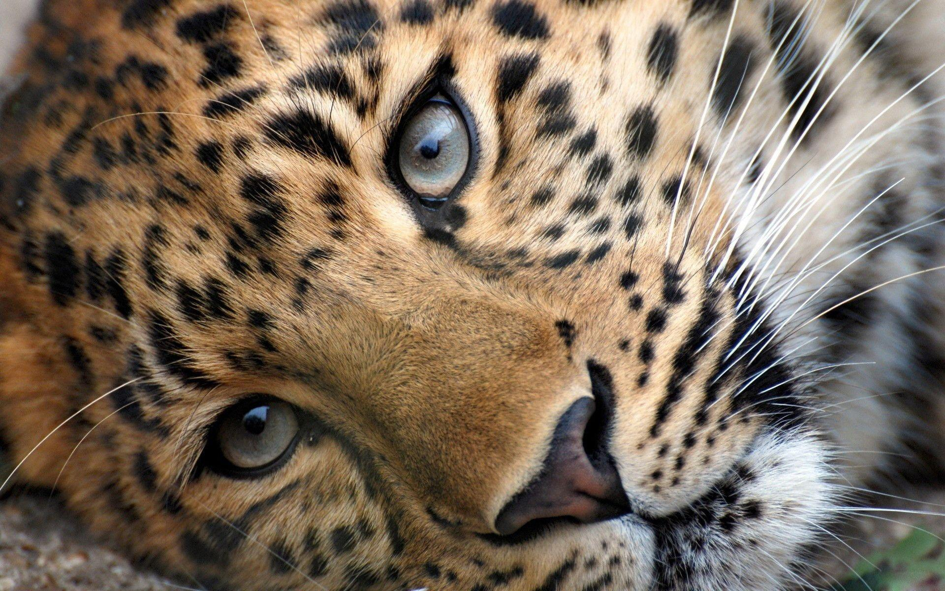 Wild Cats Wallpapers - Wallpaper Cave