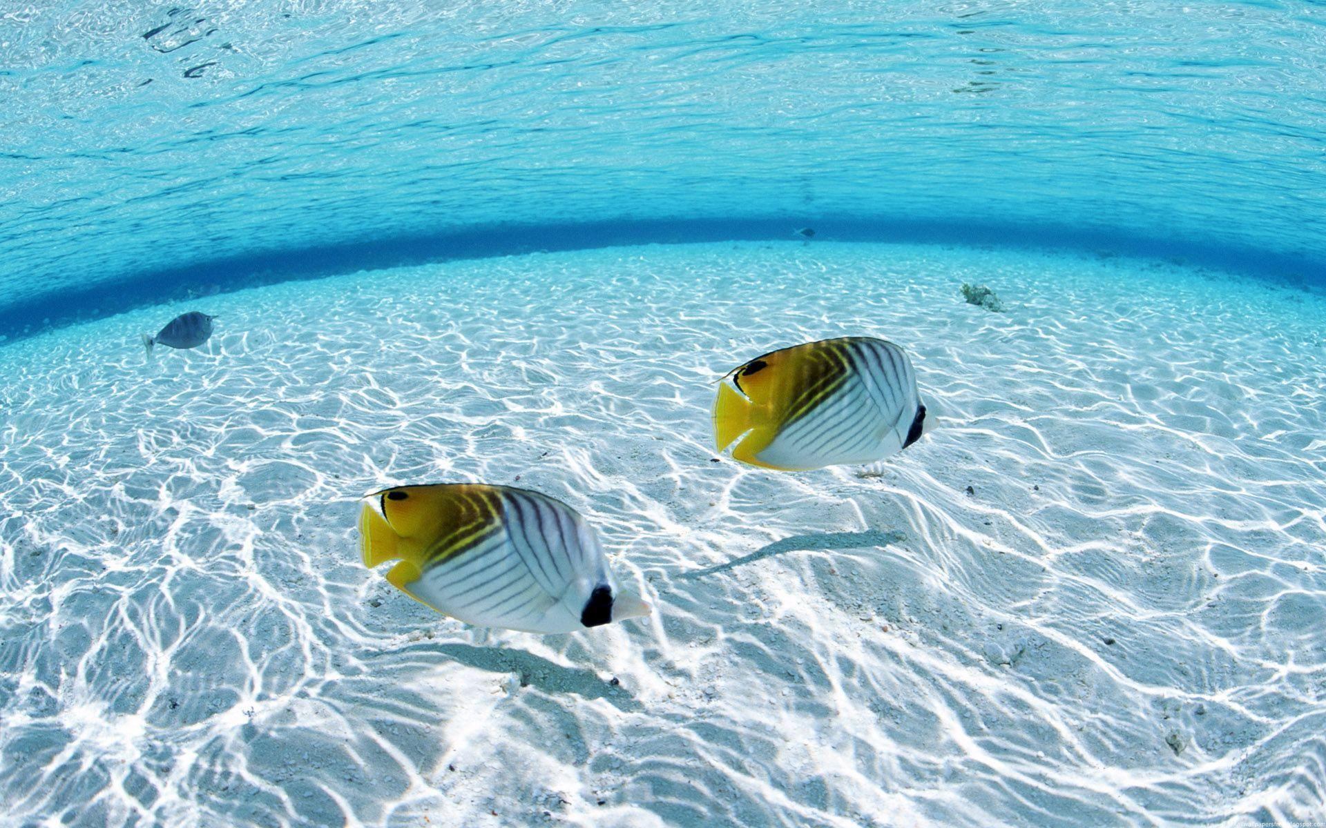 Underwater Wallpaper Image Picture
