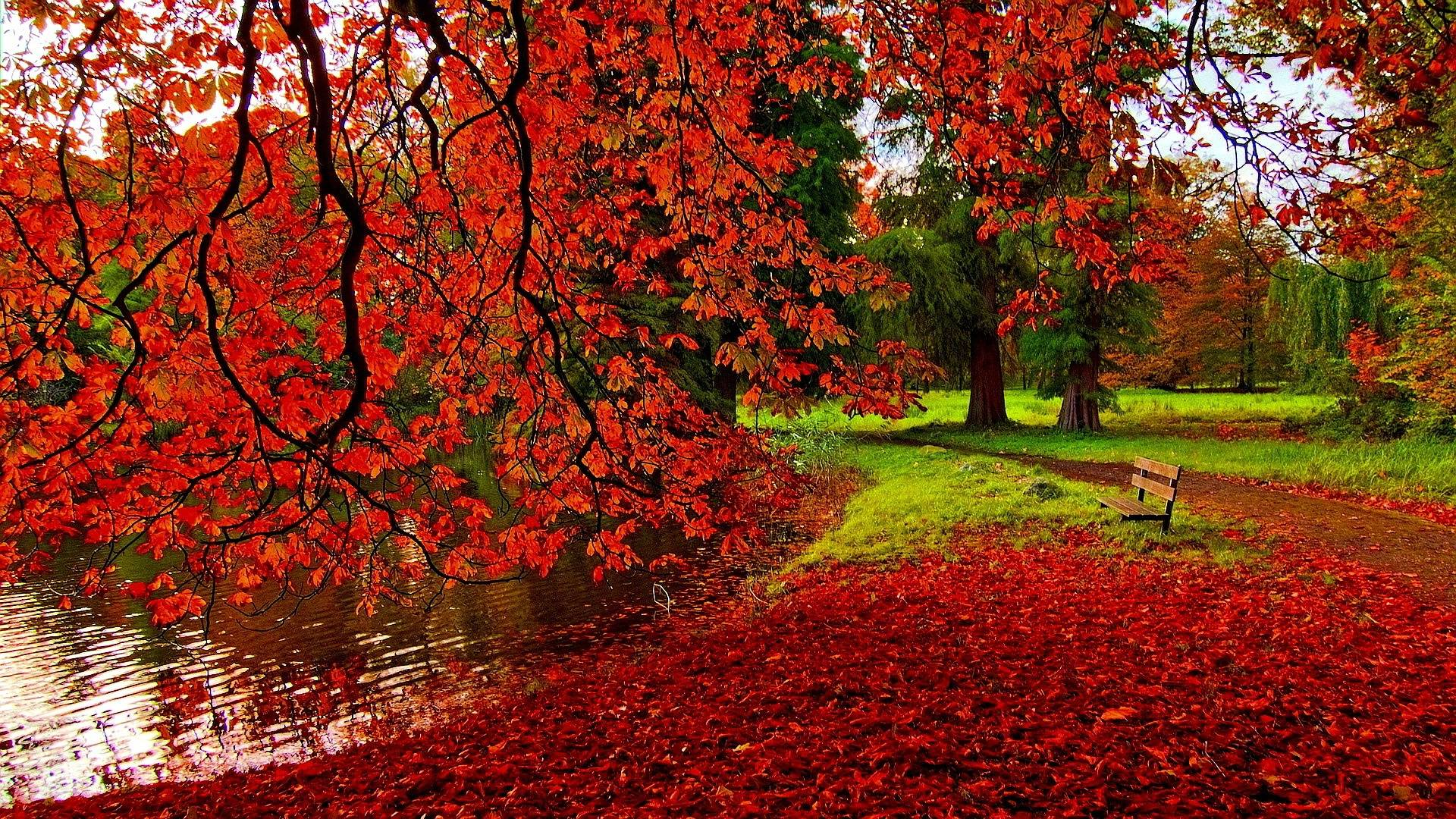 Fall Leaves Photography Wallpaper Autumn Wallpapers 1920...
