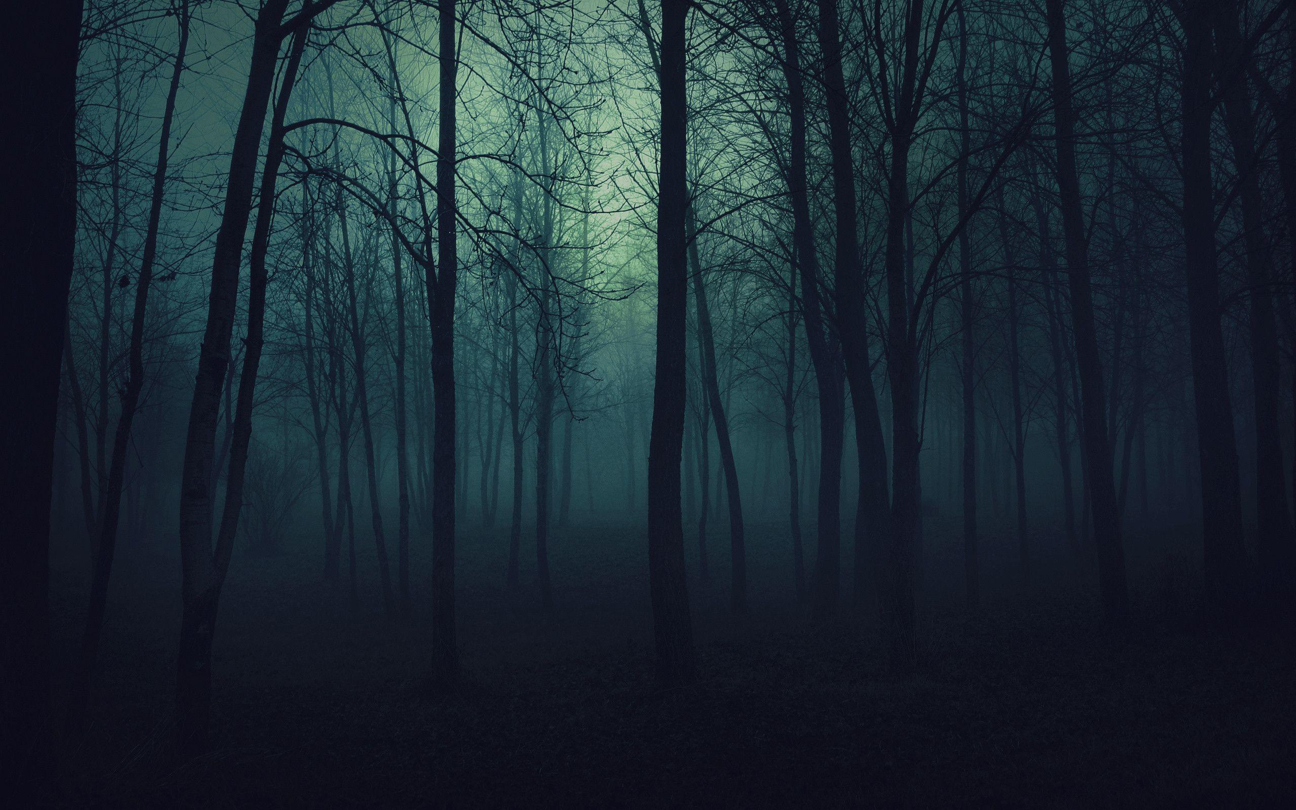 Images For Dark Woods Wallpaper Hd