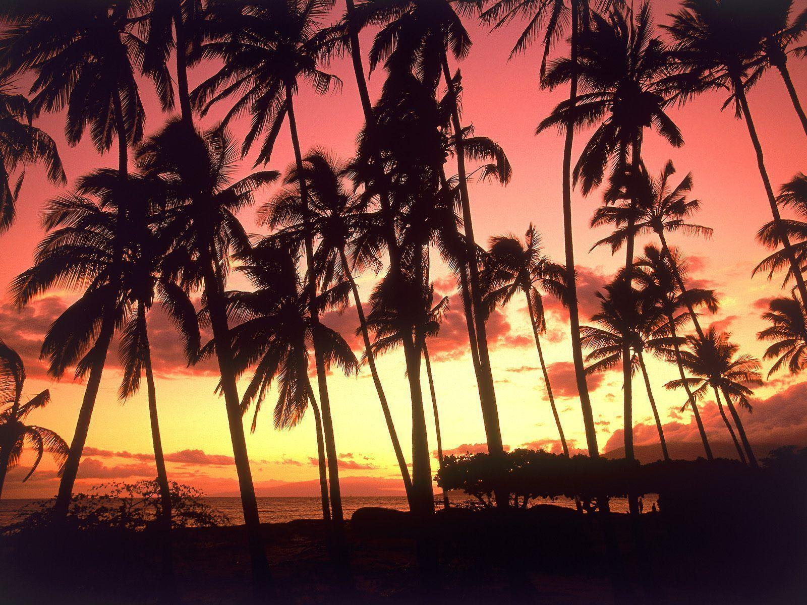 Hd Tropical Island Beach Paradise Wallpapers And Backgrounds: Tropical Island Sunset Wallpapers