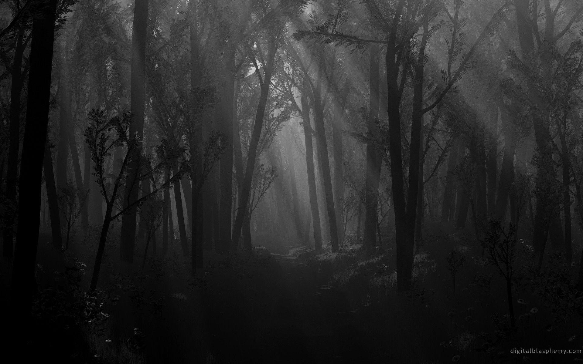 Dark Forest #8775879