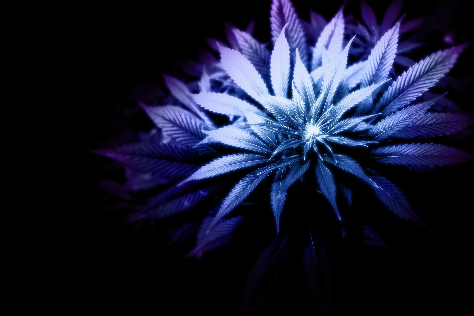 cannabis plant wallpaper black - photo #34