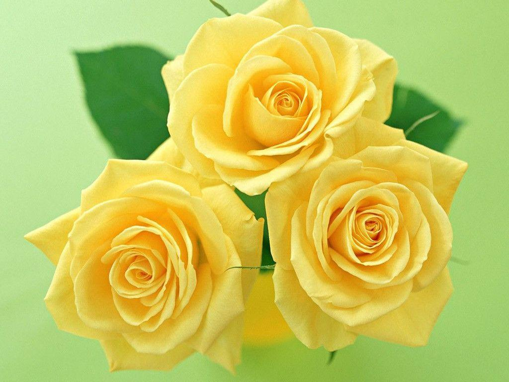 Yellow Flowers Wallpapers Wallpaper Cave