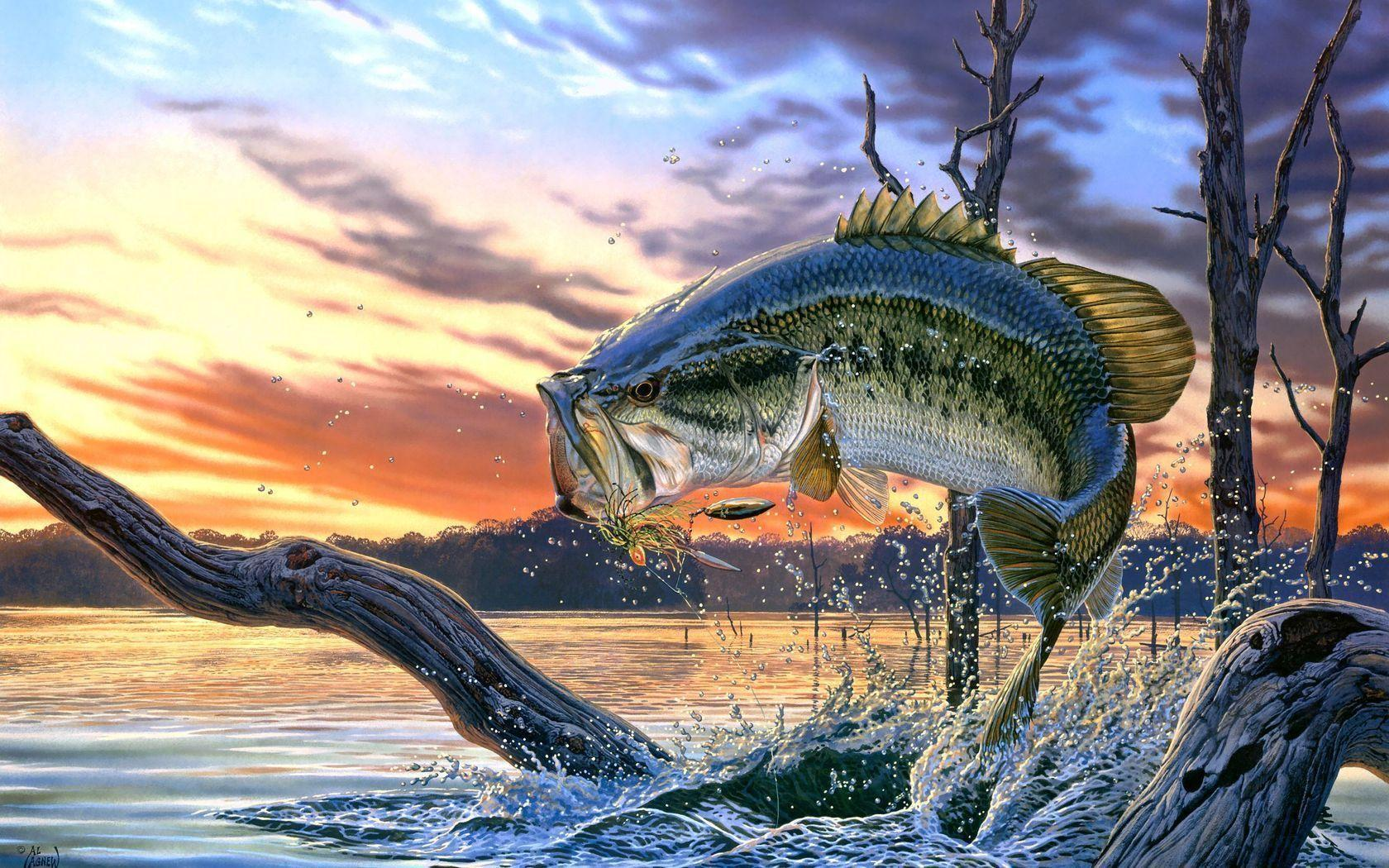 Largemouth Bass Fishing Wallpaper Background Screensaver | Best ...