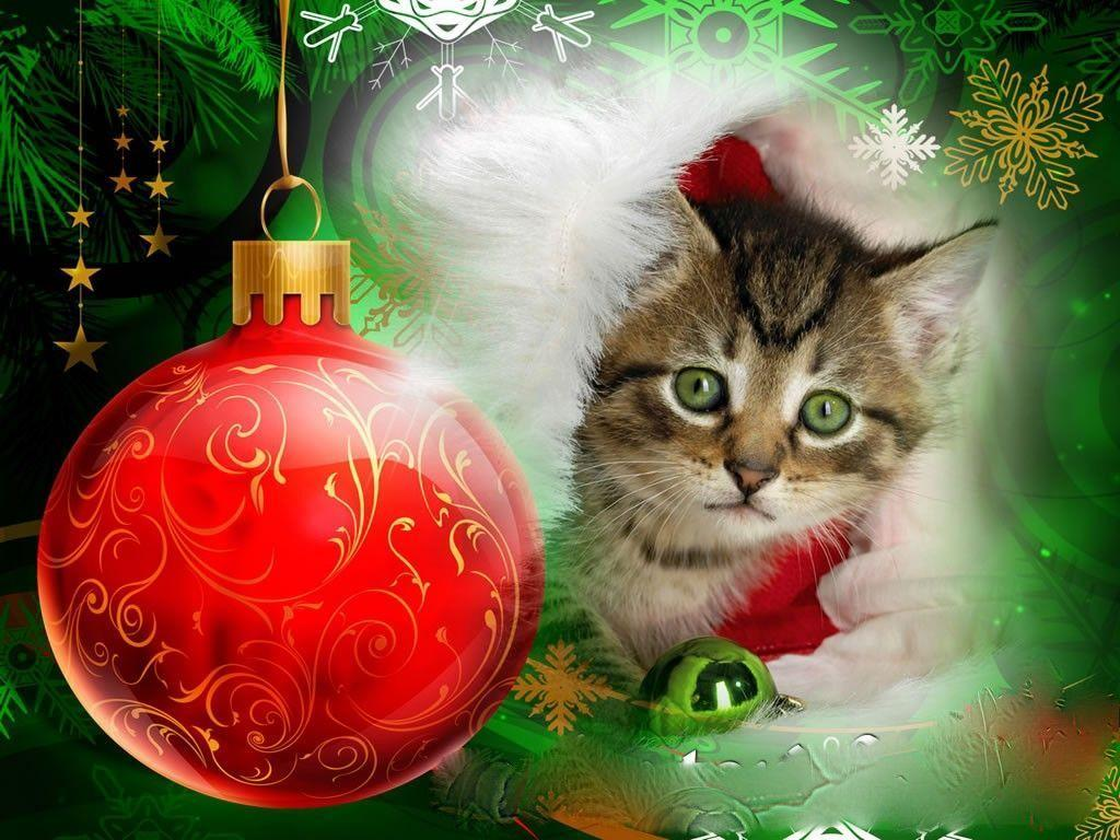 Xmas Stuff For > Cute Christmas Kittens Wallpapers