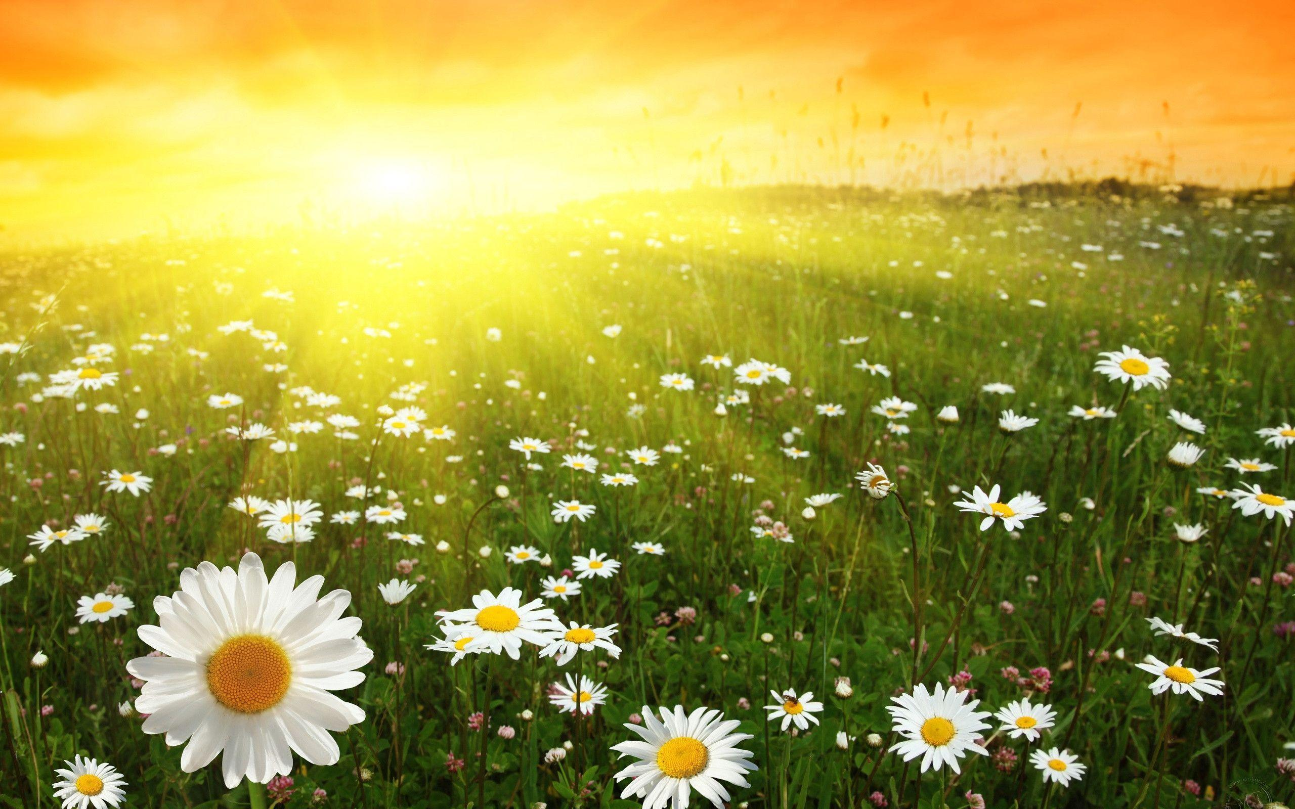 Sunny Day Wallpapers -...