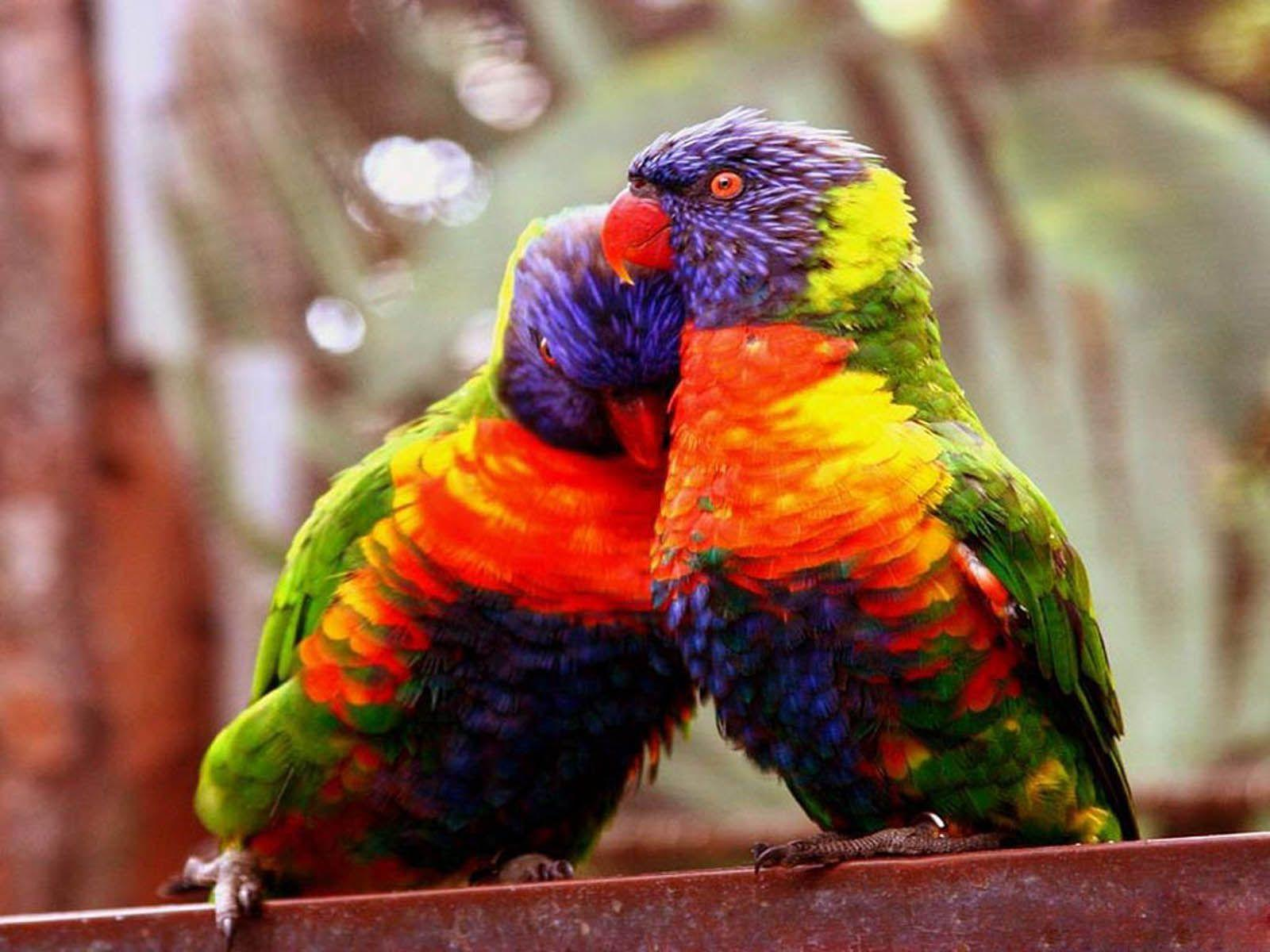 Wallpapers For Sweet Love Birds