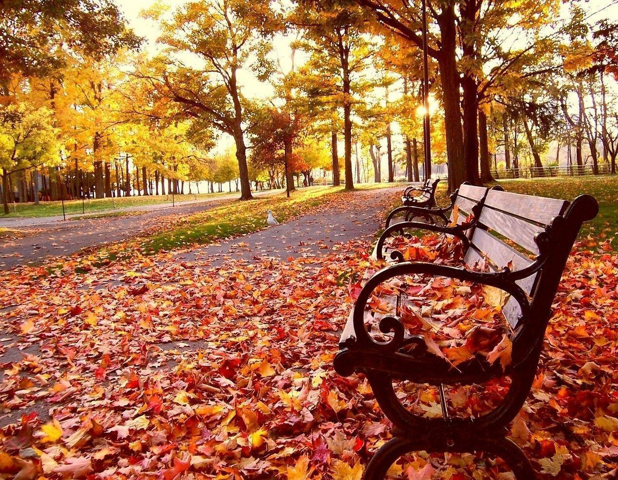 Fall Backgrounds For Computer 97079 High Definition Wallpapers